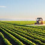 Agroalimentare in Puglia, solinelo come idee regalo: ma si acquista online